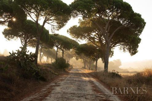Terrain de luxe à vendre Portugal, 5314 m², 1425000€