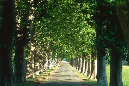 Propriété de luxe à vendre MAUSSANE LES ALPILLES, 650 m², 14 Chambres, 2809000€