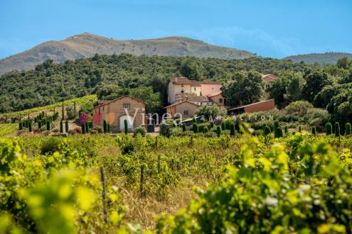 Propriété équestre et viticole de luxe à vendre PERPIGNAN, 800 m², 4770000€