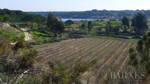 Terreno di lusso in vendita Portogallo, 520000 m², 3300000€