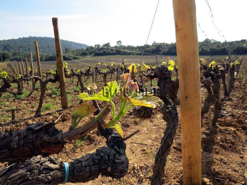 Vente Propriété équestre et viticole de prestige VAR